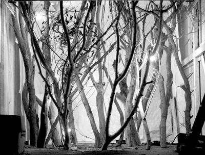 forest_soundbw